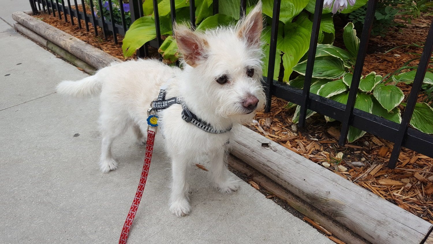 august pet of the month daffy