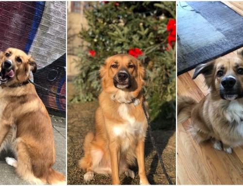 April Pet of the Month: Murphy
