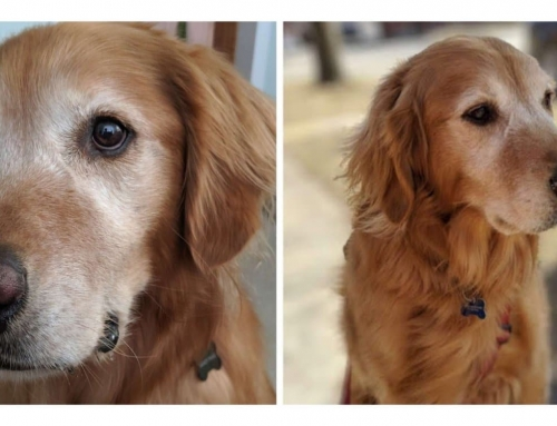 August Pet of the Month: Sandy Paws