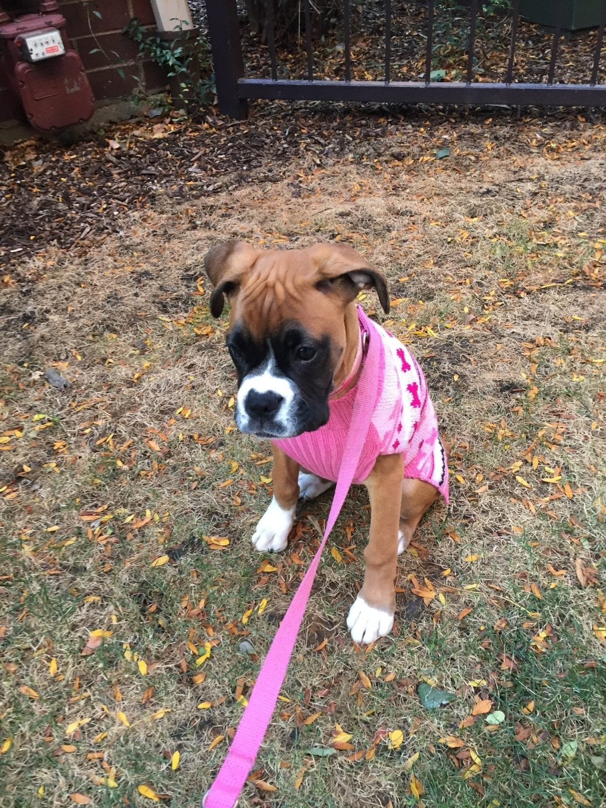 pet of the month hallie