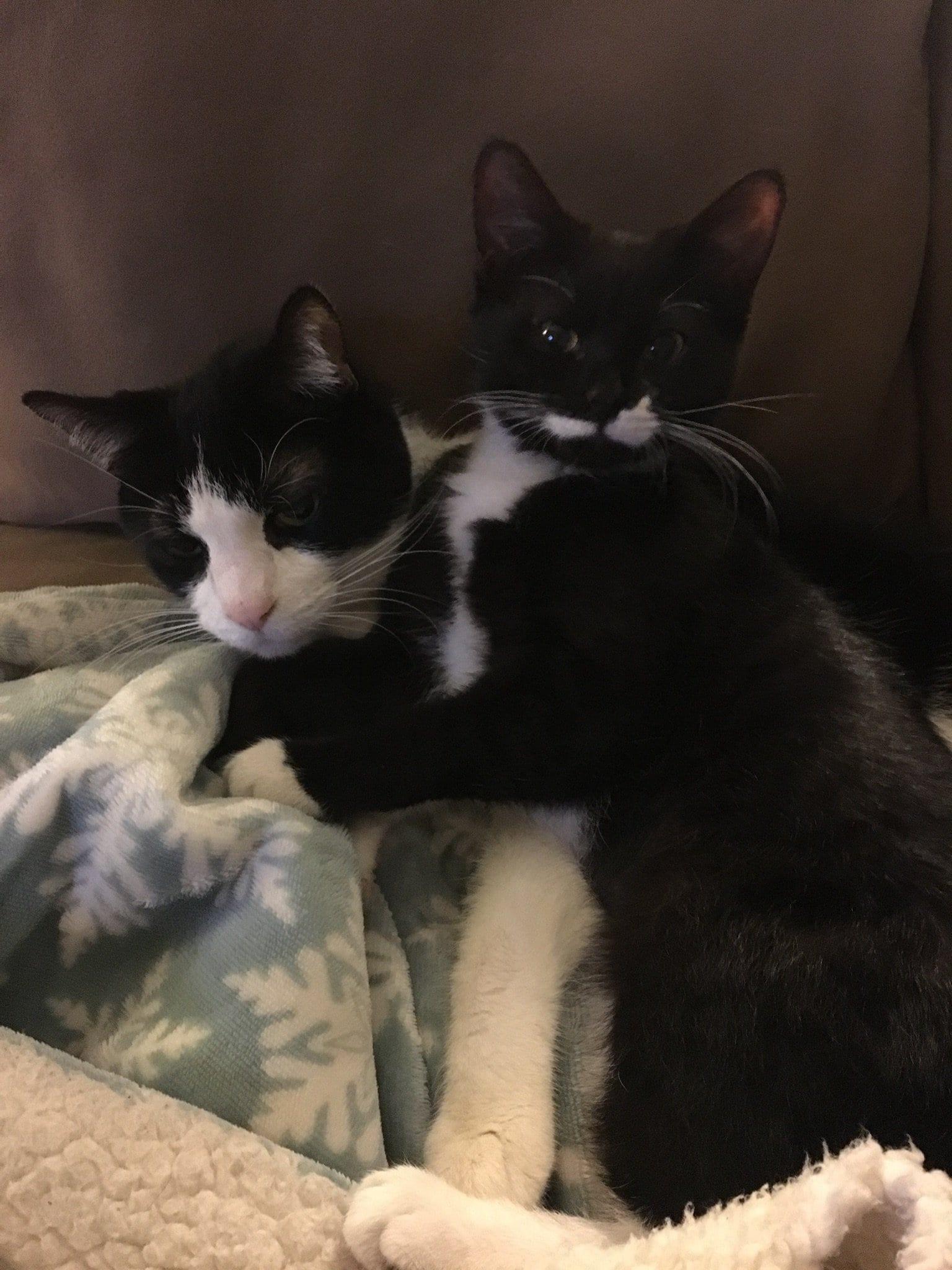 cat siblings