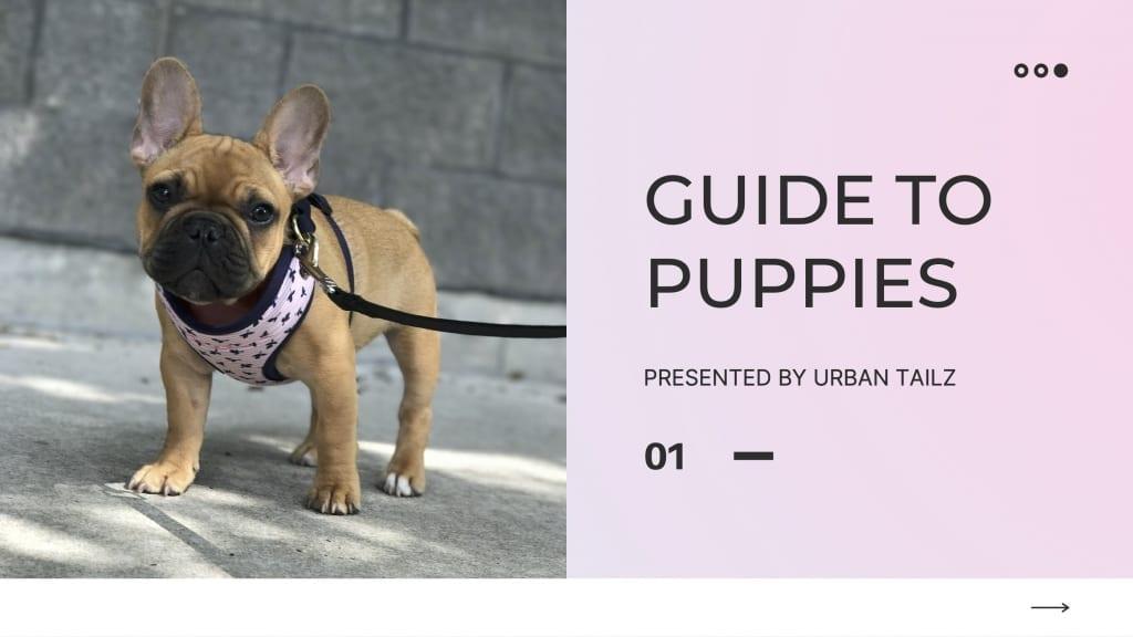 puppy guide slide 1